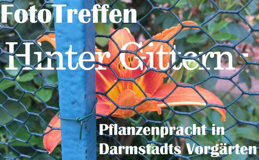 """FotoTreffen """"Hinter Gittern – Pflanzenpracht in Darmstadts Vorgärten"""""""